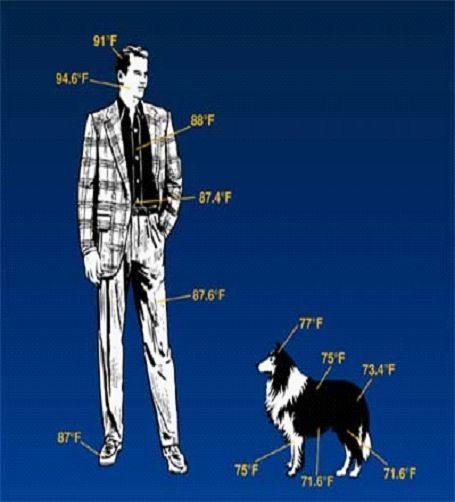Ember és kutya hőképe (Forrás: Optex)